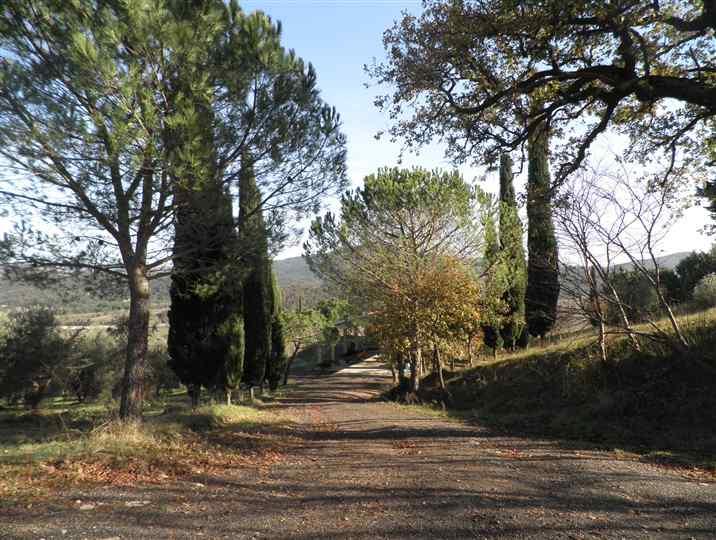 Azienda agricola in vendita a Pomarance (PI)