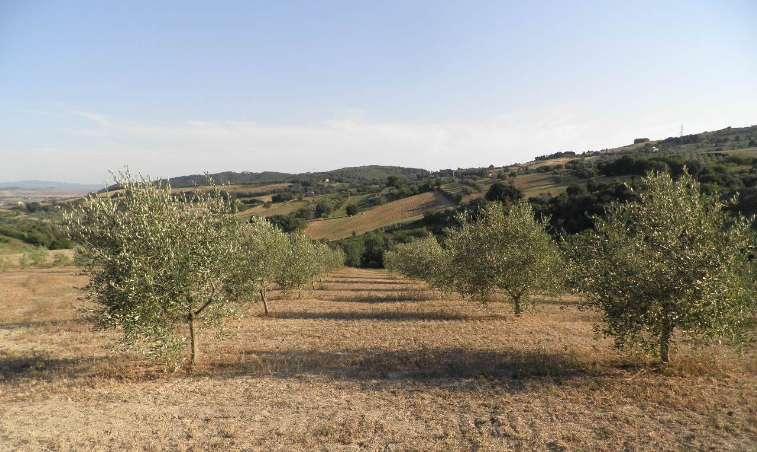 Terreno agricolo in vendita a Rosignano Marittimo (LI)