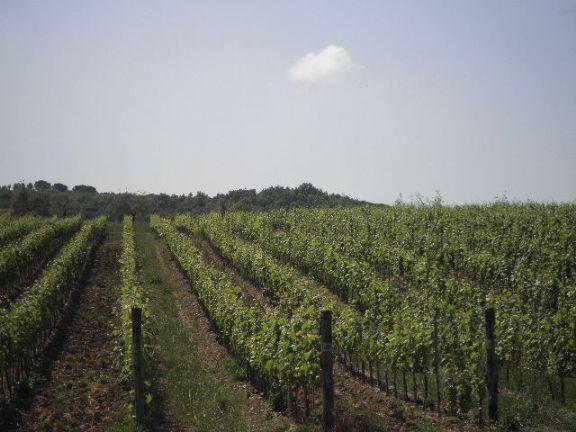Azienda agricola in vendita a Montecatini Val di Cecina (PI)