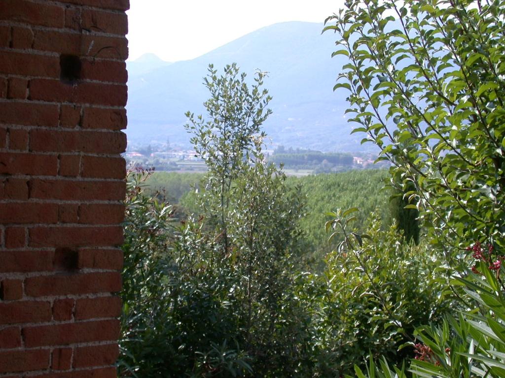 Colonica - Bientina (17/129)