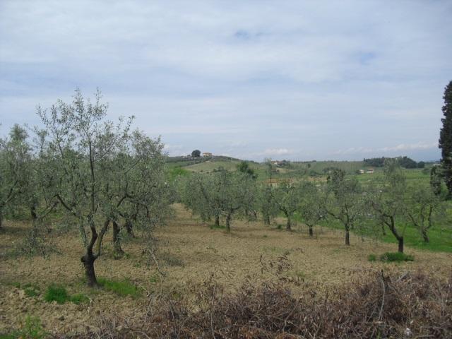 Terreno agricolo in vendita a Cerreto Guidi (FI)
