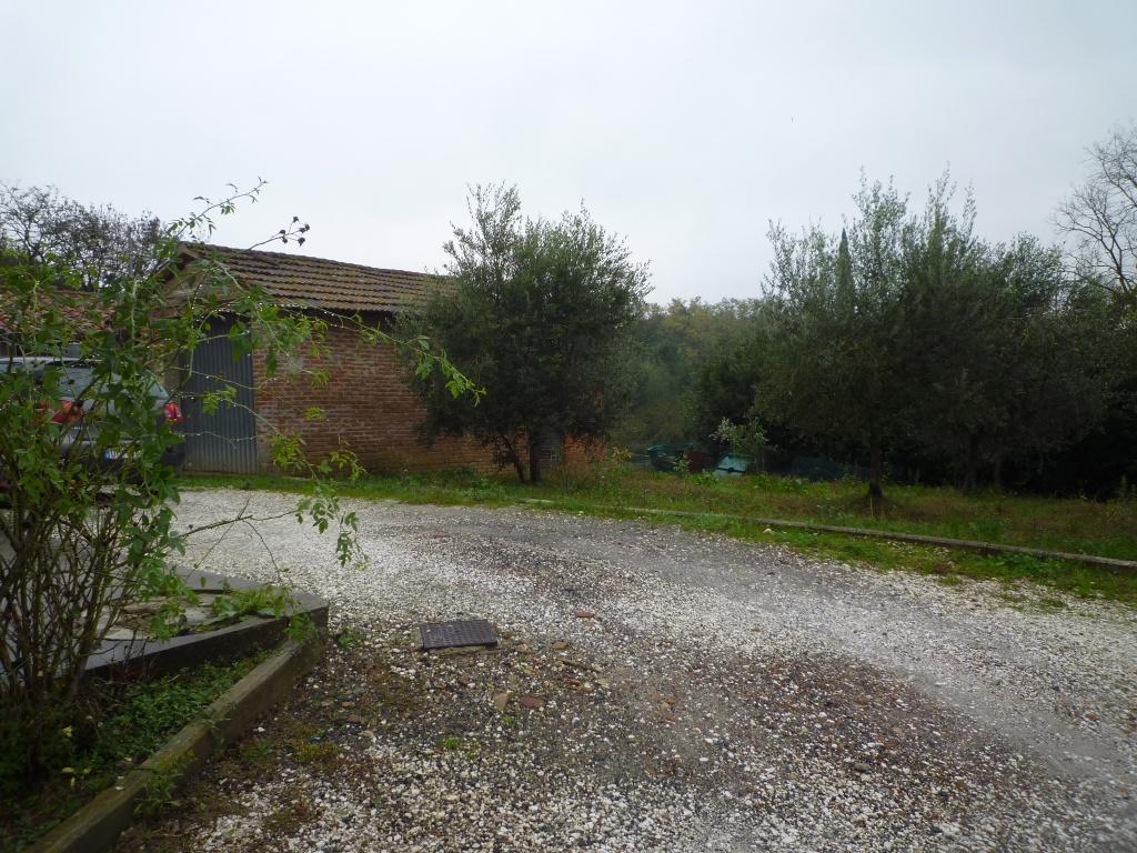 Colonica - Melone, Santa Maria a Monte (13/30)