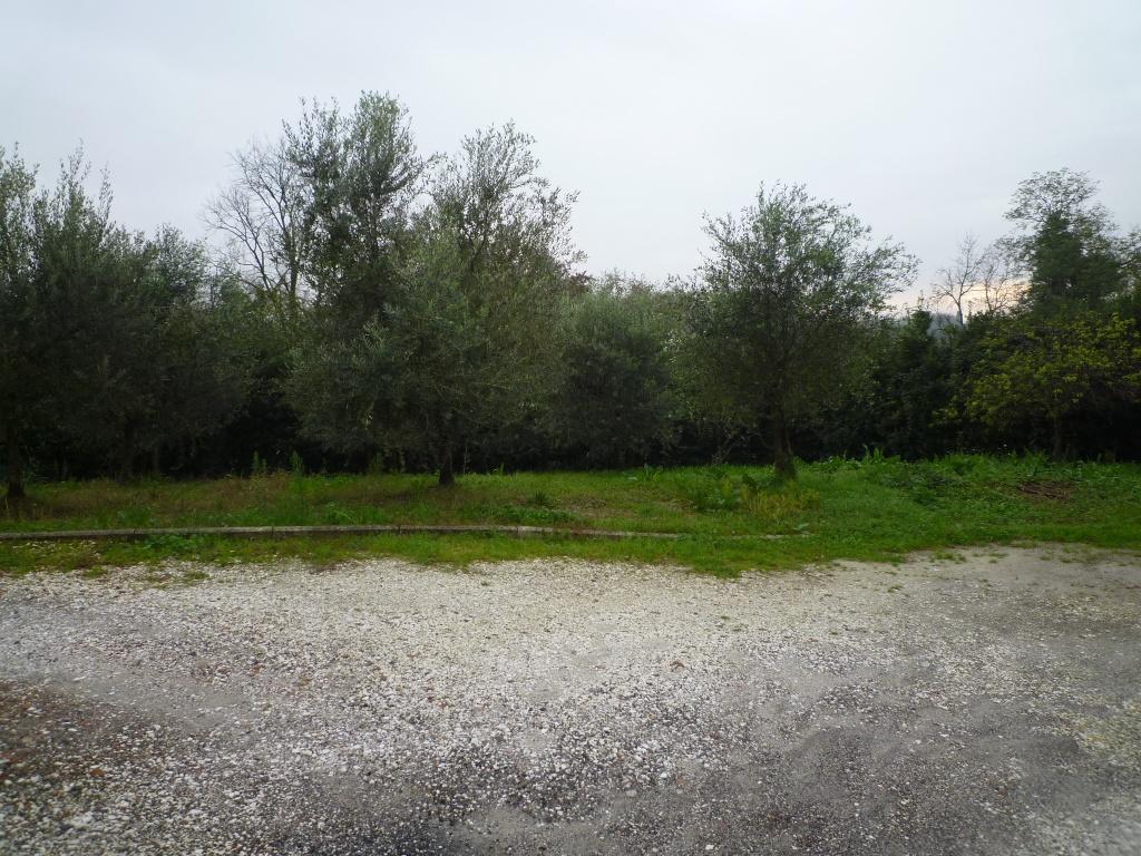 Colonica - Melone, Santa Maria a Monte (12/30)