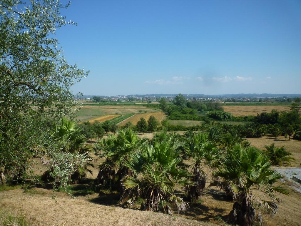 Colonica - Castelfranco di Sotto (21/34)