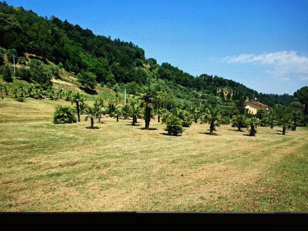 Colonica - Castelfranco di Sotto (8/34)