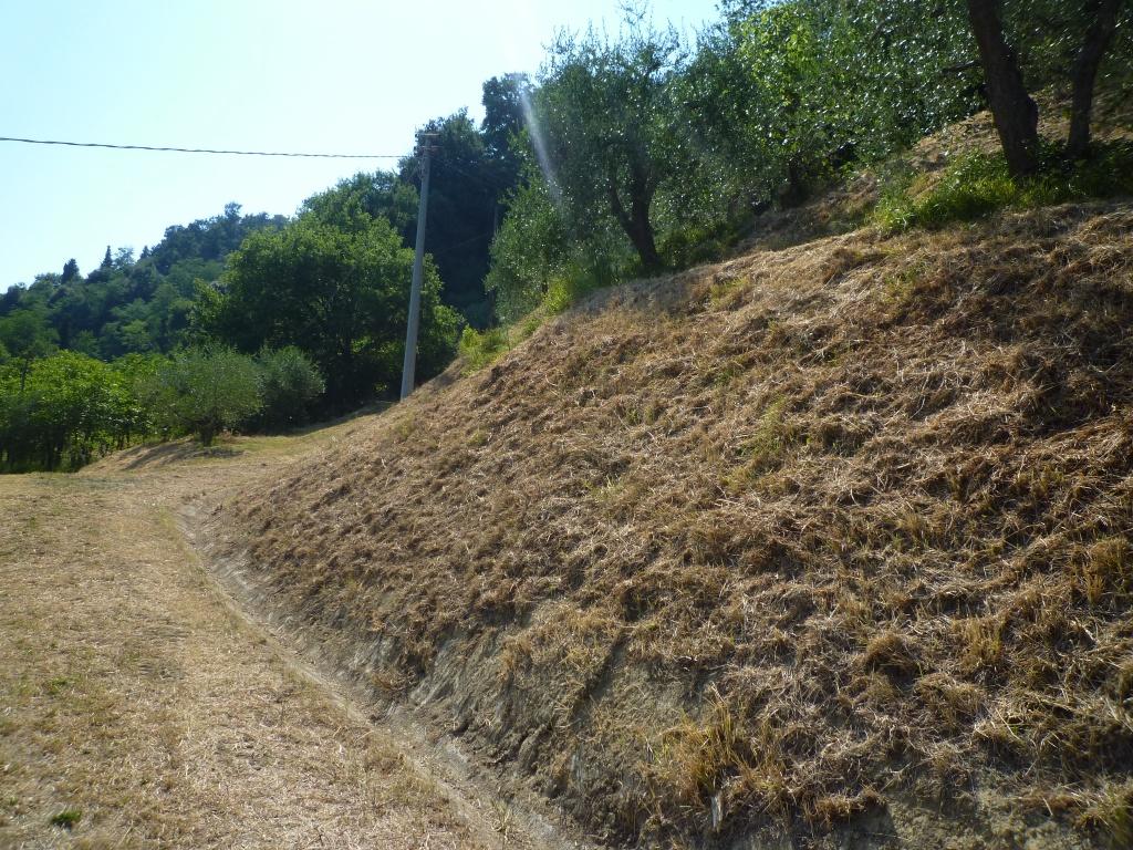 Colonica - Castelfranco di Sotto (24/34)