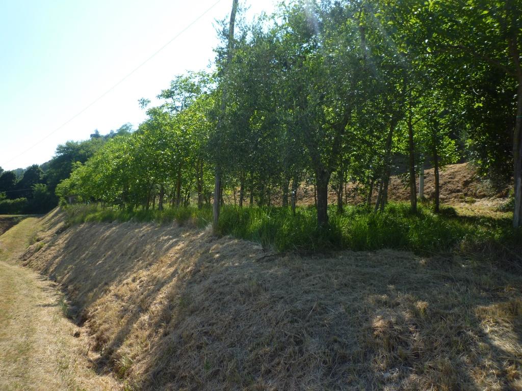 Colonica - Castelfranco di Sotto (30/34)