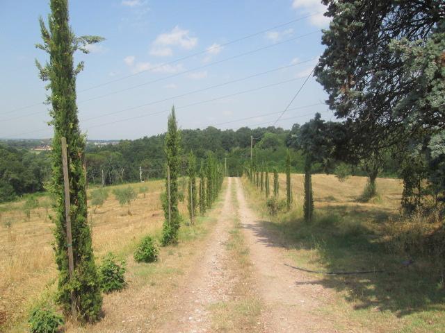 Azienda agricola in vendita, rif. T/34