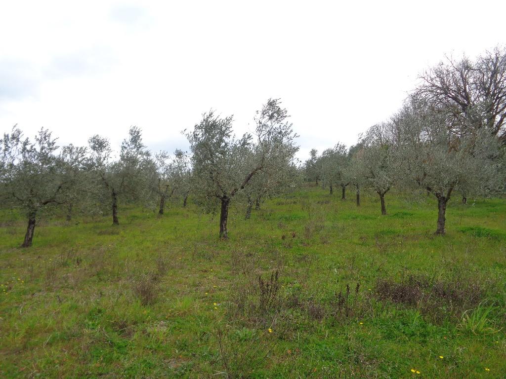 Terreno agricolo in vendita a Empoli (FI)