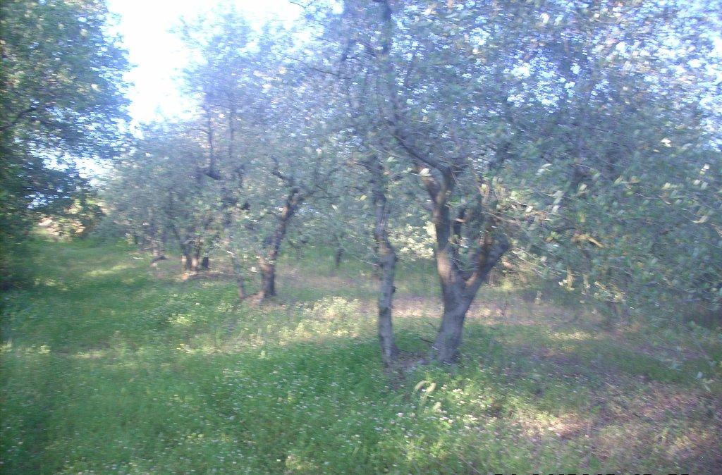 Terreno agricolo in vendita a Colle di Val d'Elsa (SI)