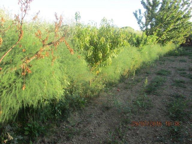 Terreno agricolo in vendita, rif. T18