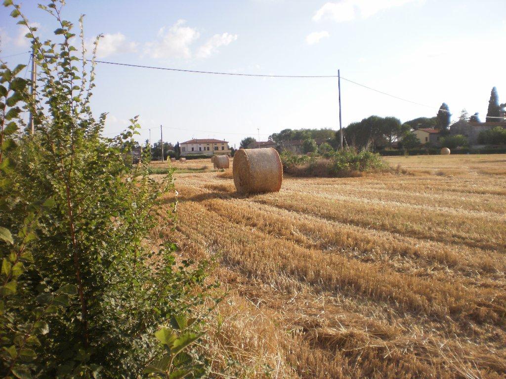 Terreno agricolo in vendita a Pontedera (PI)