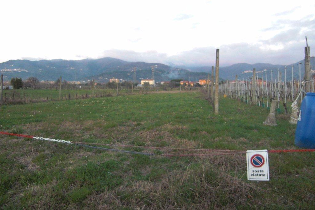Terreno agricolo in vendita a Castelnuovo Magra (SP)