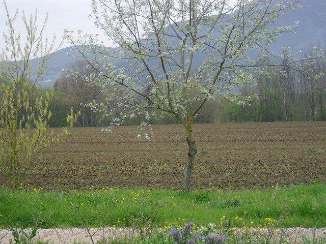 Terreno agricolo in vendita a Vicopisano (PI)