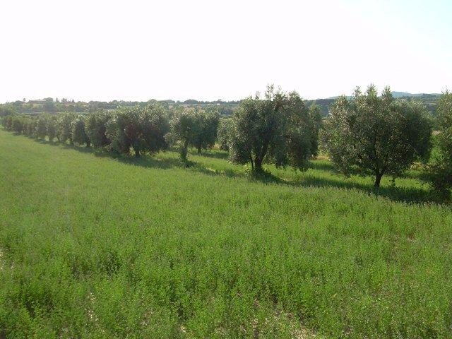 Azienda agricola in vendita a Livorno