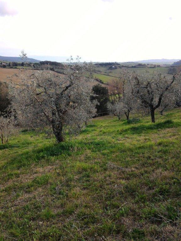 Terreno agricolo in vendita a Usigliano, Casciana Terme Lari (PI)