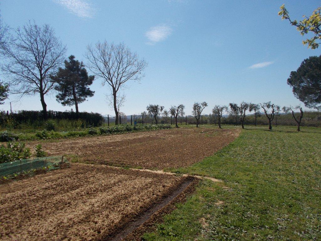Terreno agricolo a Crespina Lorenzana