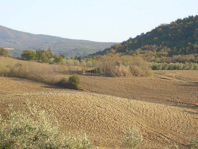 Azienda agricola in vendita a Rosignano Marittimo (LI)