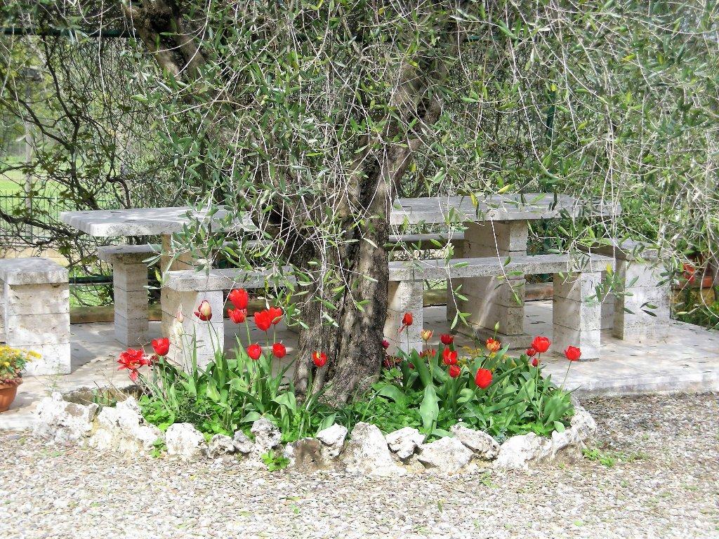 Foto 4/18 per rif. montemerano