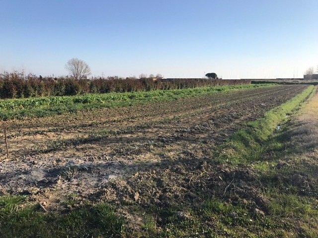 Terreno agricolo in vendita a Calcinaia (PI)