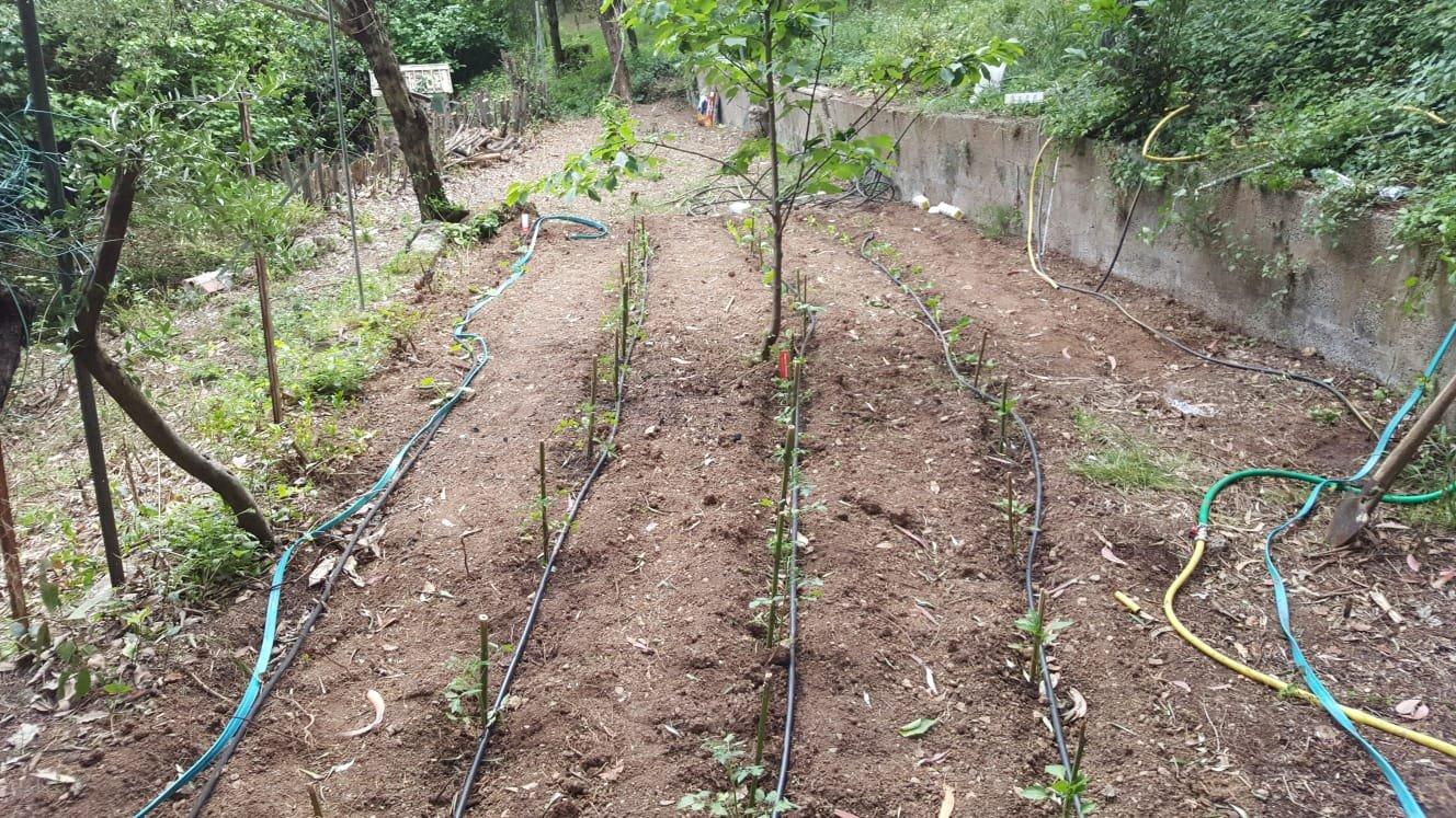 Terreno agricolo in vendita, rif. T20