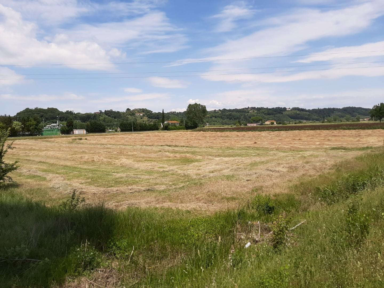 Terreno agricolo in vendita a Santa Maria a Monte (PI)