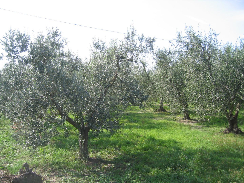 Agricultural plot in Campiglia Marittima