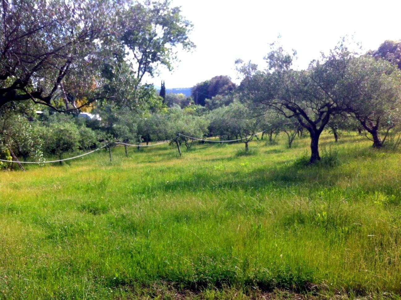 Terreno agricolo in vendita a Collinaia, Livorno