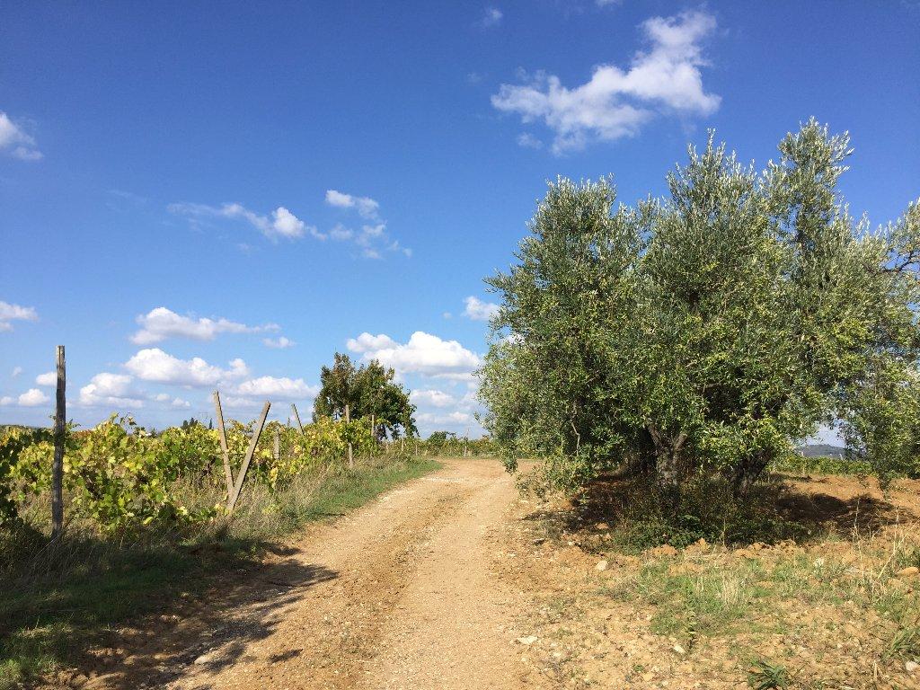 Azienda Agricola in Vendita a Lastra a Signa