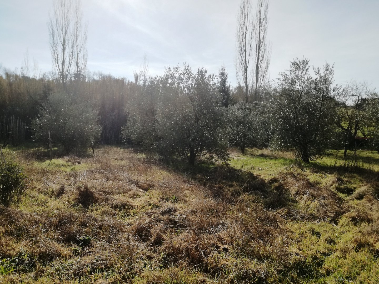 Agricultural plot for sale in Palaia (PI)