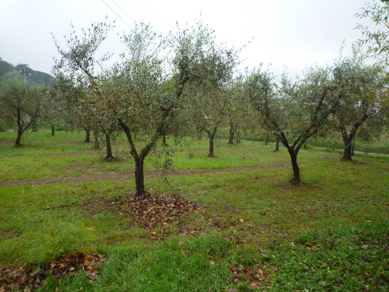 Terreno agricolo in vendita a Santa Maria a Monte