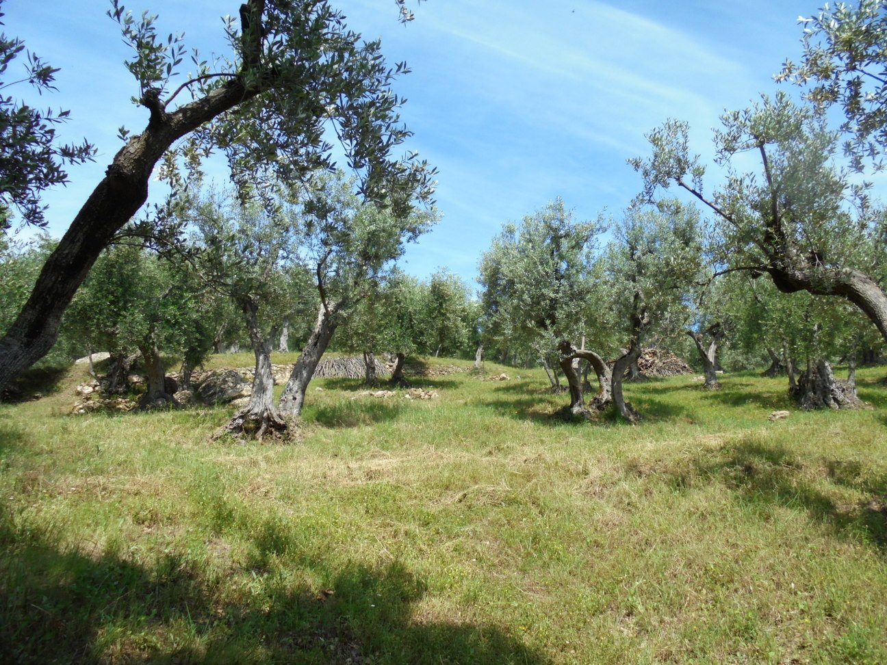 Agricultural plot in Suvereto