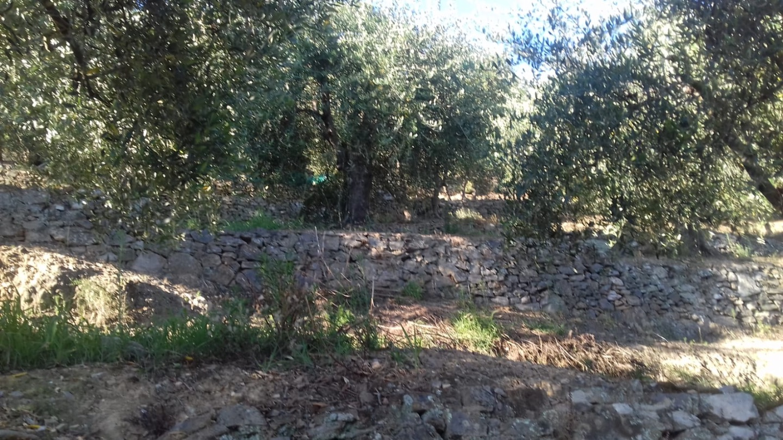 Terreno agricolo in vendita a Vicopisano