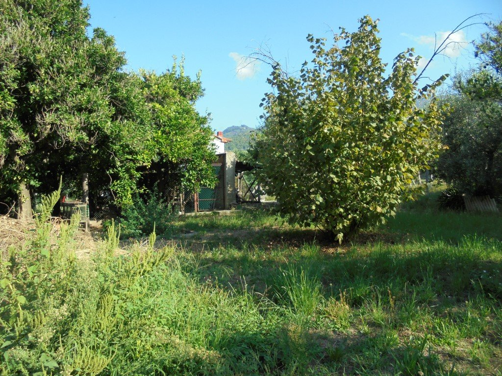 Colonica in Vendita a Montignoso (MS)
