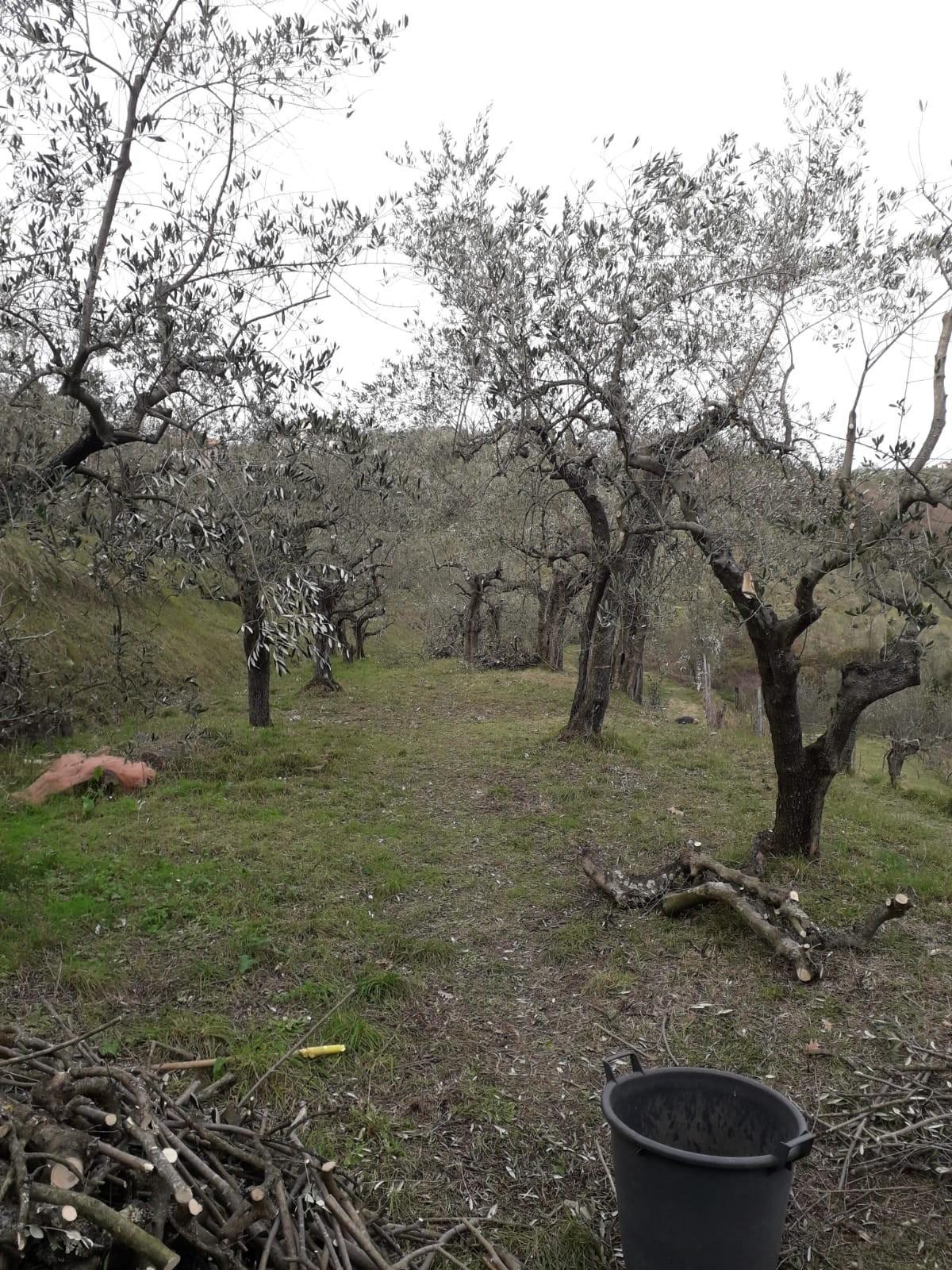 Terreno agricolo in vendita a Sarzanello, Sarzana (SP)