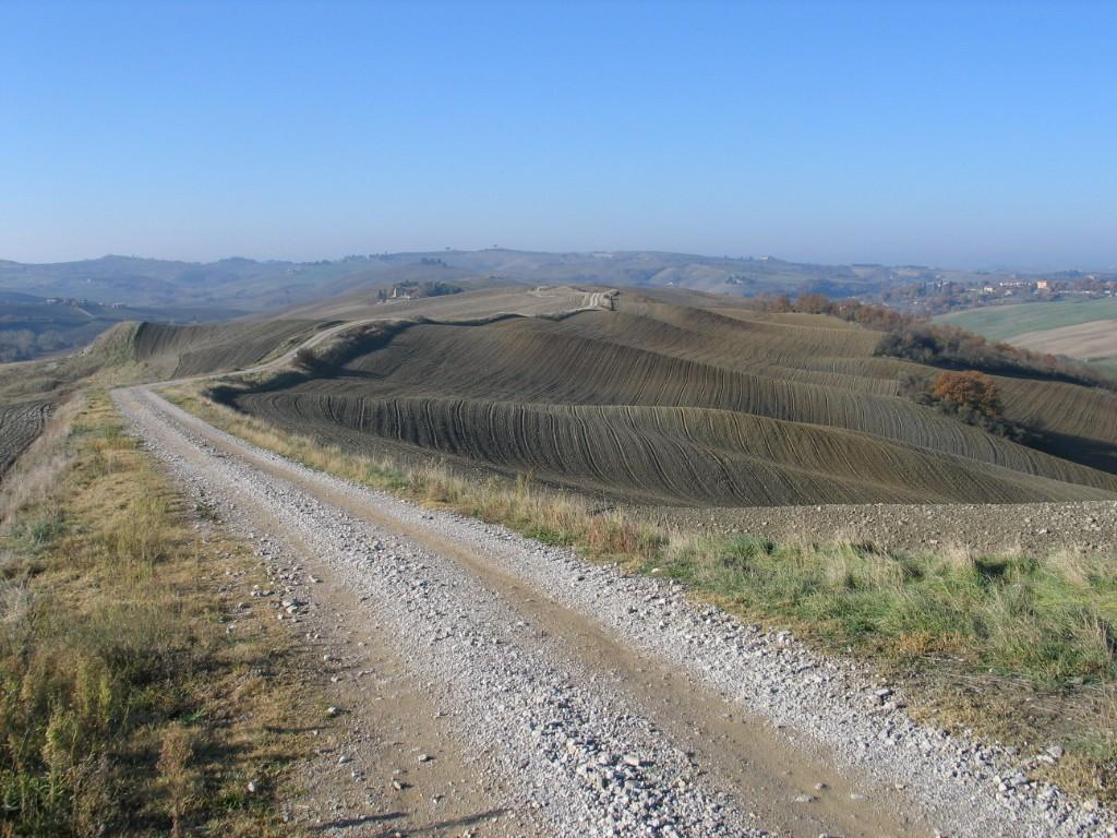 Agricultural plot for sale in Asciano (SI)