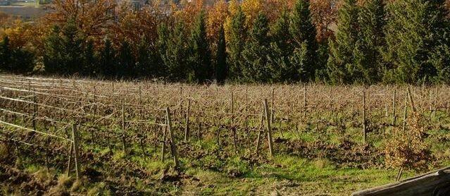 Azienda agricola in vendita a Montalcino (SI)