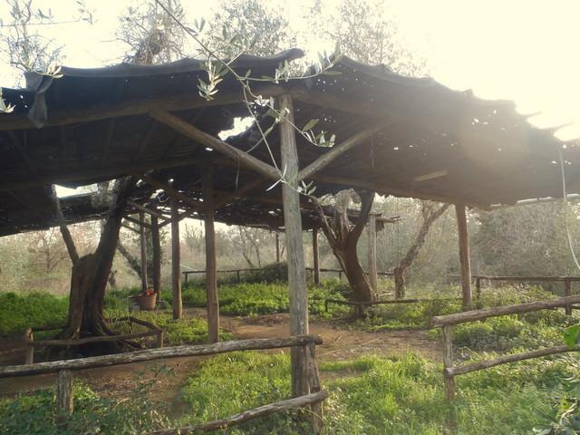 Azienda agricola in vendita, rif. T23/B