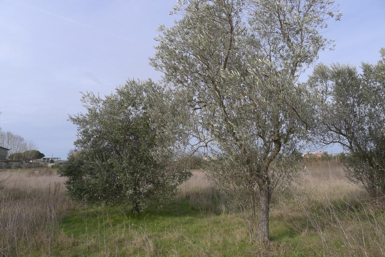 Foto 4/9 per rif. T101