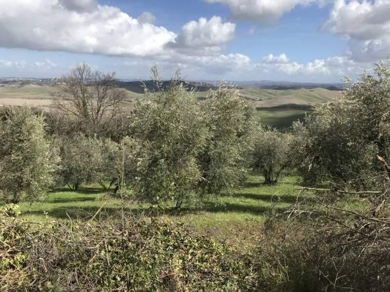 Agricultural plot for sale in Chianni (PI)
