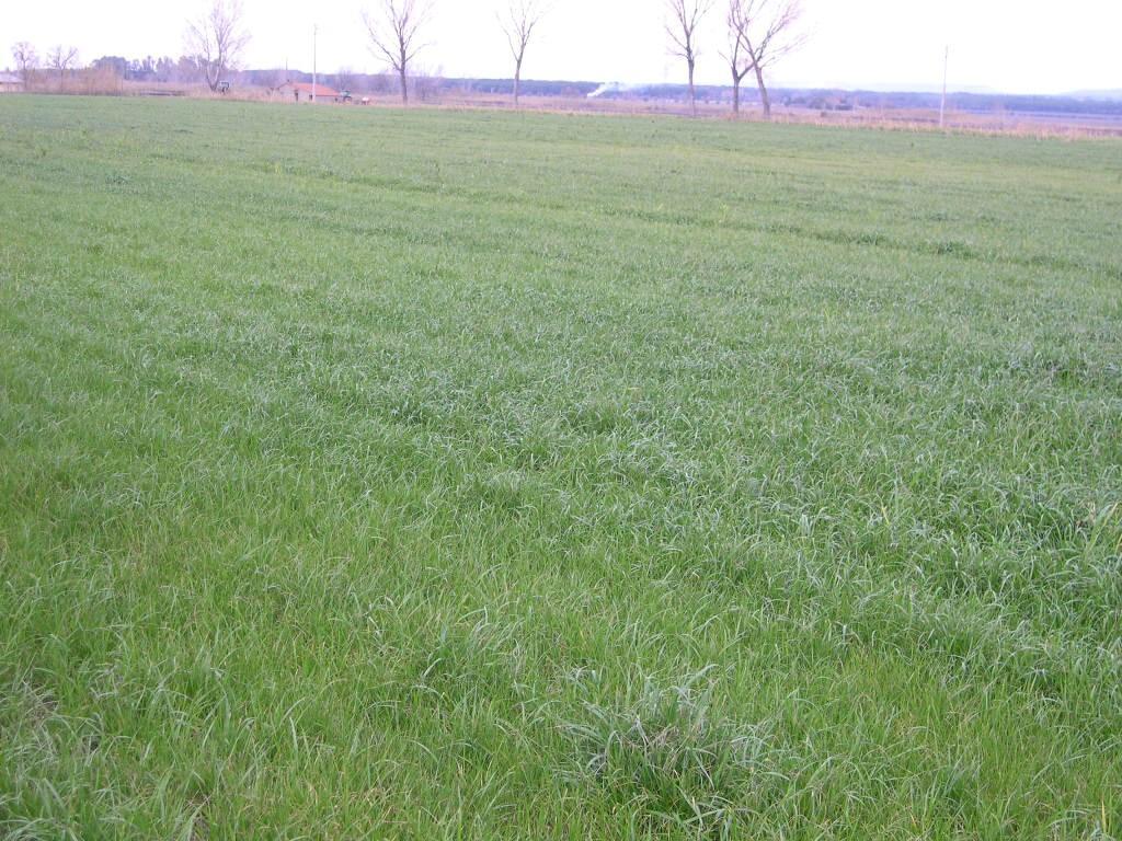 Terreno agricolo in vendita a Bolgheri, Castagneto Carducci (LI)