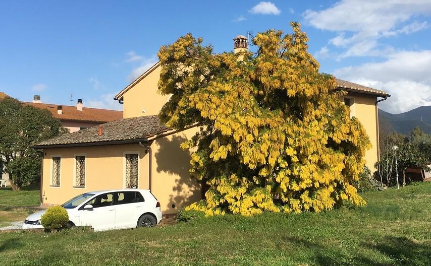 Villa singola - San Giuliano Terme (15/15)