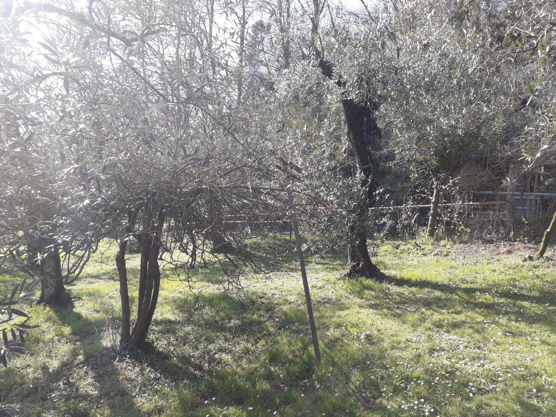 Foto 4/21 per rif. CG79