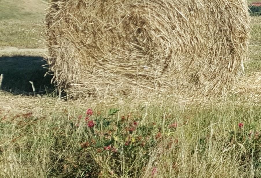 Terreno agricolo in vendita a Casciana Terme Lari (PI)