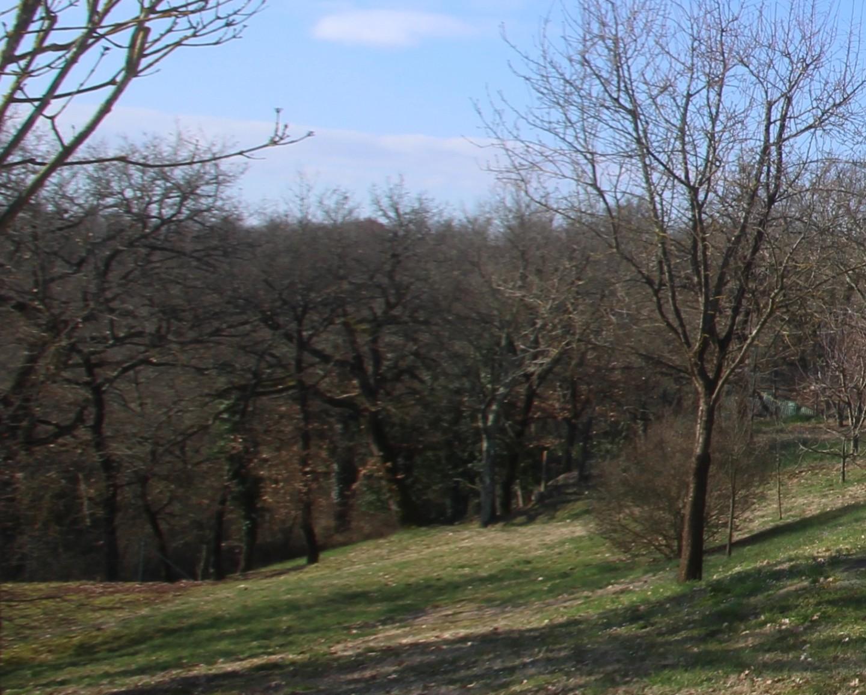 Terreno agricolo in vendita a Monteriggioni (SI)