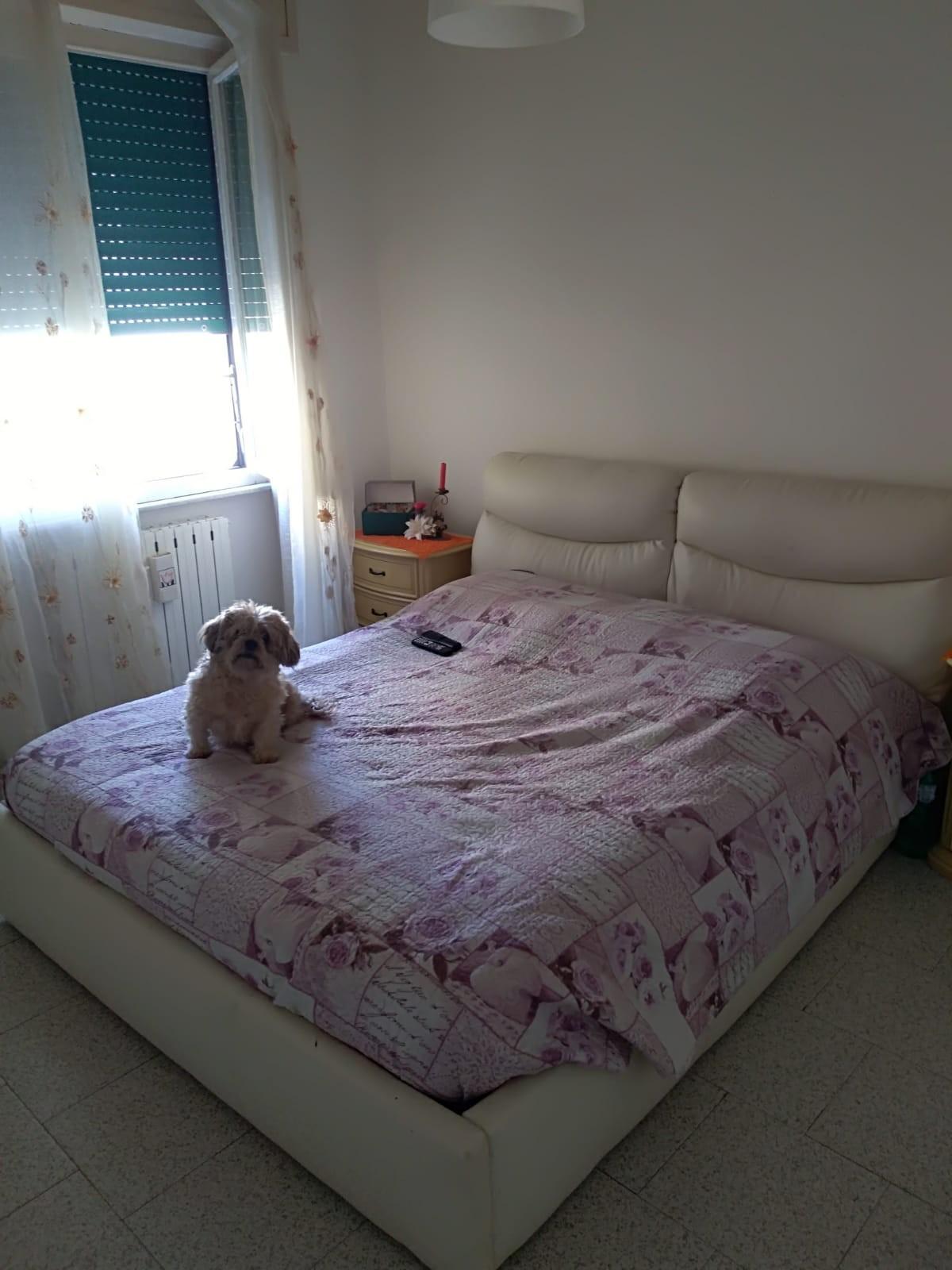 Appartamento in affitto, rif. A2033