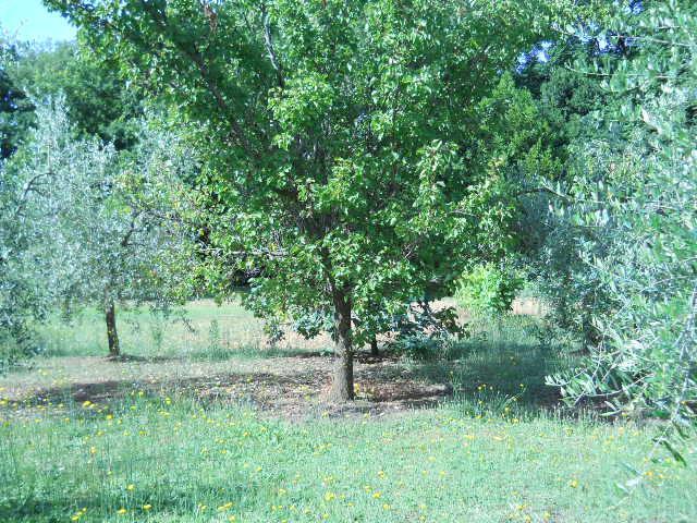 Terreno agricolo in Affitto a Calci (PI)