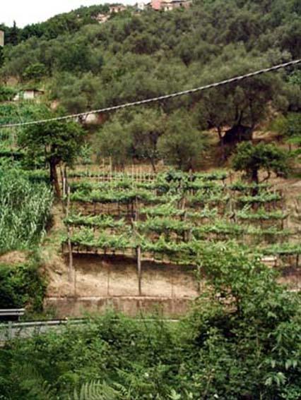 Terreno agricolo in vendita a Fontia, Carrara (MS)