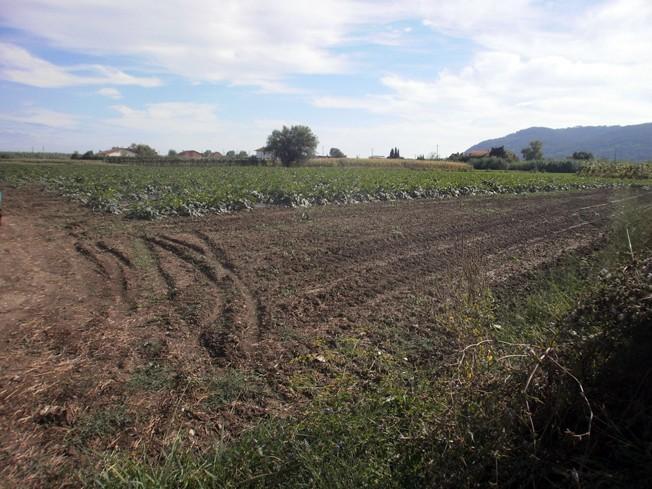 Terreno agricolo in Vendita a San Lazzaro, Sarzana (SP)
