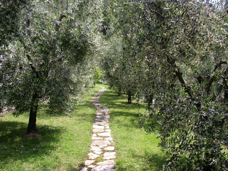 Foto 19/30 per rif. villa massaciuccoli